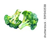 watercolor vegetable broccoli... | Shutterstock . vector #509343538
