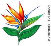 bird of paradise flower  exotic ... | Shutterstock .eps vector #509388004