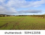A Young Wheat Crop In An...