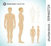 full length naked white male...   Shutterstock .eps vector #509460724