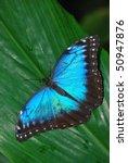 butterfly   Shutterstock . vector #50947876