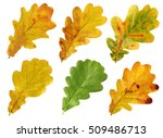 set of autumn leaves of oak... | Shutterstock . vector #509486713