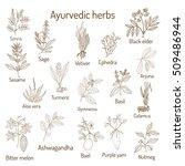 ayurvedic herbs  natural... | Shutterstock .eps vector #509486944