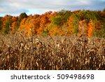 Cornfield With Autumn Colours...