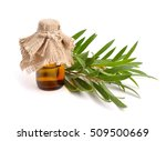 melaleuca essential oil in the... | Shutterstock . vector #509500669