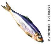 Stock photo herring fish isolated watercolor illustration on white background 509506996