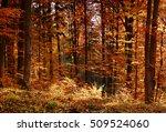 sunny autumn forest | Shutterstock . vector #509524060