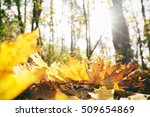 close up view of fallen leaves... | Shutterstock . vector #509654869
