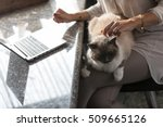 Stock photo large cat relaxing on its owners lap as she caresses its silky fur while working at a table at home 509665126