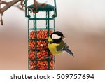 great tit hanging on peanut ... | Shutterstock . vector #509757694