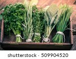 close view on fresh herbs bunch | Shutterstock . vector #509904520