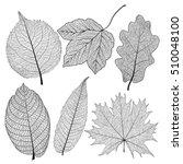 Set Leaves Of Black On White....