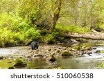 lone black bear in the british...   Shutterstock . vector #510060538