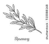 rosemary vector hand drawn... | Shutterstock .eps vector #510088168