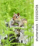 little chipmunk hiding in the... | Shutterstock . vector #510102436