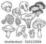 mushroom hand drawn sketch... | Shutterstock .eps vector #510113506