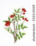 medicinal plants and herbs... | Shutterstock . vector #510115429