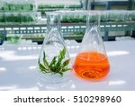 Small photo of Exhales acoroides plant tissue culture in the laboratory, lab tissue in university