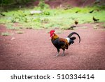Brown Chicken Or Rooster...