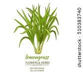 lemongrass vector illustration | Shutterstock .eps vector #510383740