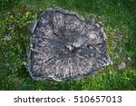 tree stump from above | Shutterstock . vector #510657013