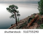 Pine Tree On The River Bank