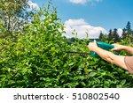 cutting a hedge  gardening | Shutterstock . vector #510802540