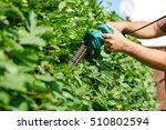 cutting a hedge  gardening | Shutterstock . vector #510802594