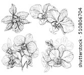 hand drawn set with orchid... | Shutterstock .eps vector #510806704