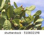 cactus   Shutterstock . vector #510832198