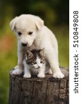 Stock photo cute puppy and kitten on the grass outdoor 510849808