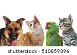 Stock photo pets animals group collage for pet shop or veterinary on white background 510859396