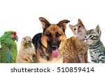 Stock photo pets animals group collage for pet shop or veterinary on white background 510859414