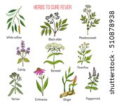 herbs for fever cure  hand... | Shutterstock .eps vector #510878938