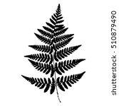 fern 14. silhouette sheet fern... | Shutterstock .eps vector #510879490