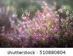 pink wild flowers | Shutterstock . vector #510880804