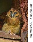 kuala lumpur bird park. kuala... | Shutterstock . vector #510893830