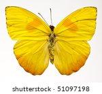 Orange Barred Sulphur Butterfly ...
