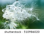 close up and soft focus of wild ... | Shutterstock . vector #510986020