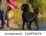 Woman With Two Royal Poodles A...
