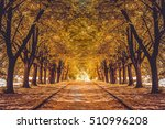 beautiful alley in a park with... | Shutterstock . vector #510996208