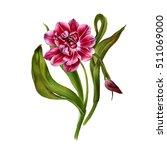 watercolor botanical... | Shutterstock . vector #511069000
