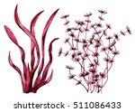sea weed. watercolor. red... | Shutterstock . vector #511086433