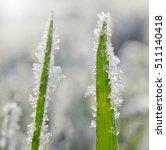 Frozen Grass Close Up. Nature...