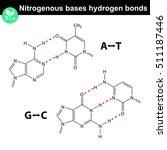 nitrogenous bases molecular... | Shutterstock .eps vector #511187446