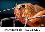 grasshopper | Shutterstock . vector #511218280