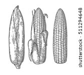 set ripe cob of corn. vector... | Shutterstock .eps vector #511294648