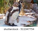 Penguin Change Molt