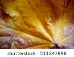 maple leaf close up | Shutterstock . vector #511347898