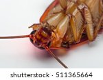 macro of cockroach insects of... | Shutterstock . vector #511365664
